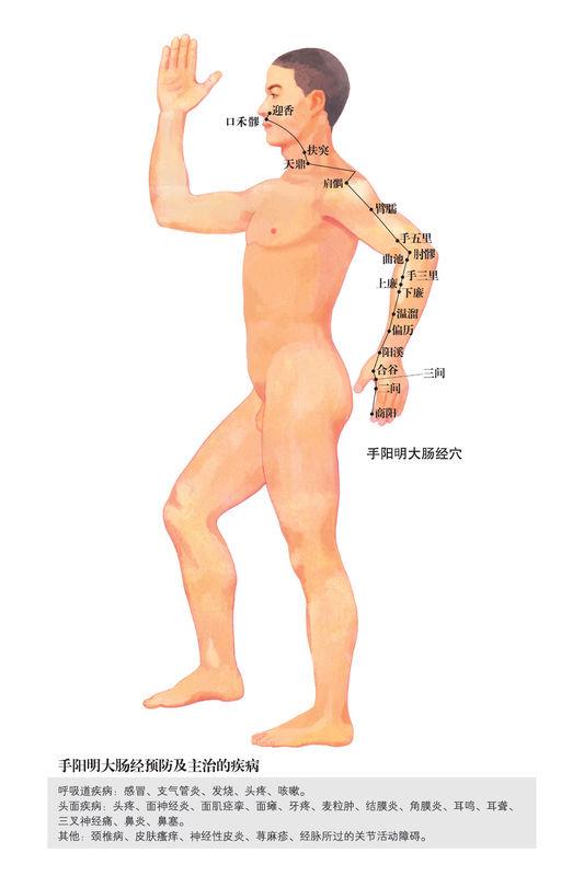 手陽明大腸經