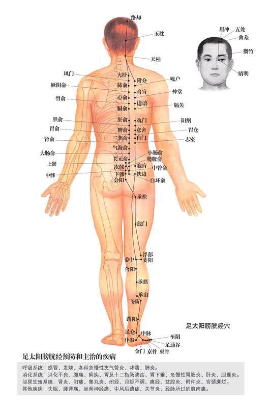 足太陽膀胱經